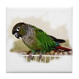 Greencheek Conure Tile Coaster