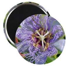Passiflora T-Shirt Magnet