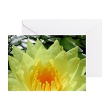 Yellow Lilly Greeting Cards (Pk of 10)
