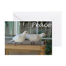 Cute Pet/ Doves Greeting Cards