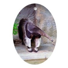 (11p) Giant Anteater Front Oval Ornament