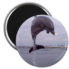 dolphin_jump_iso Magnet