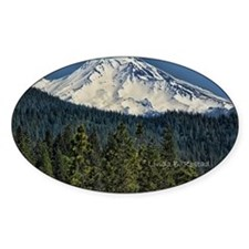 shasta Decal