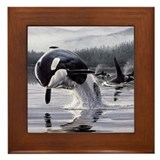 Framed Tile -- KILLER WHALE