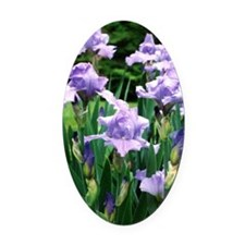 iris note card Oval Car Magnet