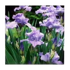 iris note card Tile Coaster