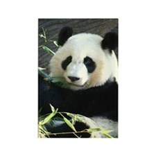 panda2 - Copy Rectangle Magnet