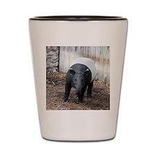 tapir-Cstr Shot Glass