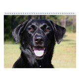 Labador retriever Wall Calendars