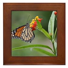 IMG_5308 Framed Tile