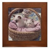 Ragdoll Kittens Framed Tile