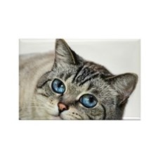 Blue Eyed Cat Magnets