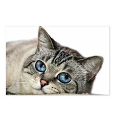 Blue Eyed Cat Postcards (Package of 8)