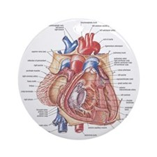 Heart anatomy Round Ornament