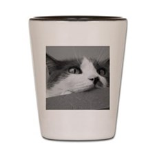 Kittyface_poster_bw Shot Glass