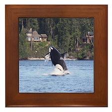 IMG_6861 Framed Tile