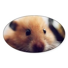 Teddy Bear Hamster Decal