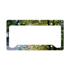 Fall leaves License Plate Holder