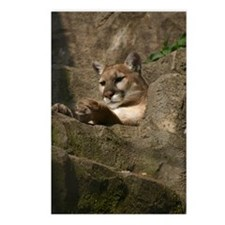 Puma Postcards (Package of 8)