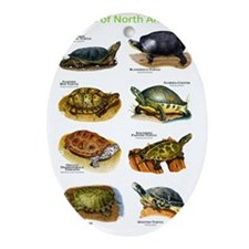 Turtles of North America Oval Ornament