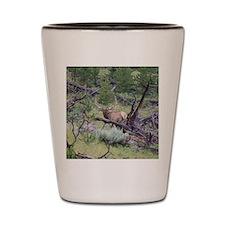 bull elk Shot Glass