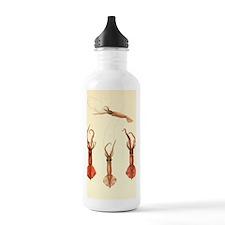 squids2 Water Bottle