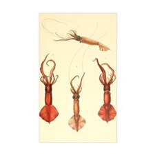squids2 Decal