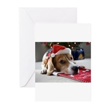 Beagle lying on a Christmas stockin Greeting Cards