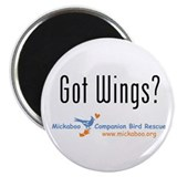 Got Wings? Magnet