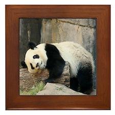 Copy of panda1 Framed Tile