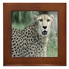 Copy of IMG_8747 Framed Tile