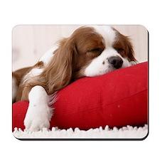 Spaniel pillow Mousepad