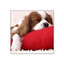 "Spaniel pillow Square Sticker 3"" x 3"""