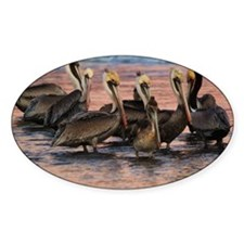 Brown Pelicans Santa Barbara Pier Decal