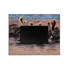 Brown Pelicans Santa Barbara Pier Picture Frame