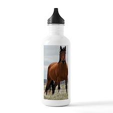 bay_441 Water Bottle
