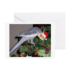 Cut Pet/ Bucky The Cockatiel Greeting Cards