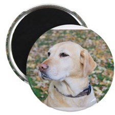 Yellow Lab #2 Portrait Magnets
