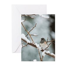 Winter Junco Greeting Cards