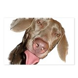 Silly Weimaraner Postcards (Package of 8)