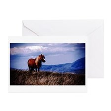Welsh Pony Portrait Greeting Cards