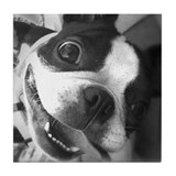 Boston Terrier Tile Coaster