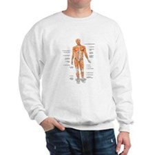 Muscles anatomy body Sweatshirt