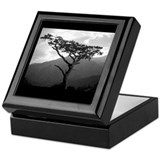 Memory Tree Bookplate Storage Box Keepsake Box