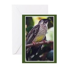 Blank Yellow Belly Blank Greeting Cards set of 6