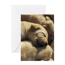 SleepingPups_Labrador_Pups2 Greeting Card