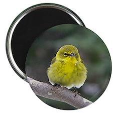 Fat Yellow Finch Magnet