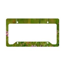 for mug Dragonfly 07-02-08 -  License Plate Holder
