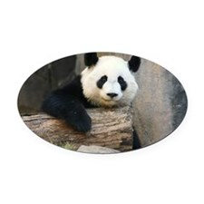 panda3 Oval Car Magnet