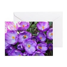 crocus-note_4589 Greeting Card
